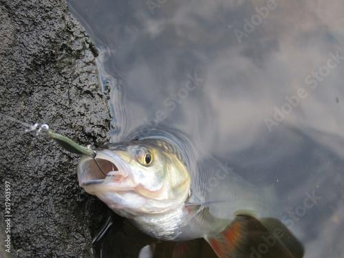 Fotografie, Tablou fishing