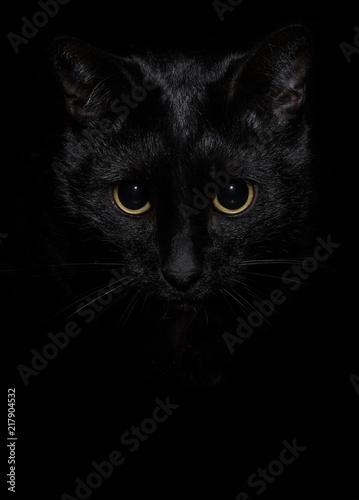 Foto The black cat