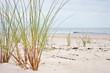 Plaża i nadmorska trawa