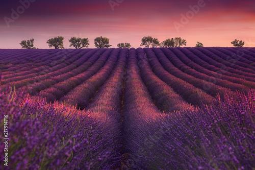 Photo Stands Lavender Coucher de soleil typique sur un paysage de perspective de champ de lavande en Provence.