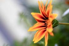 Abstract Bright Orange Flower