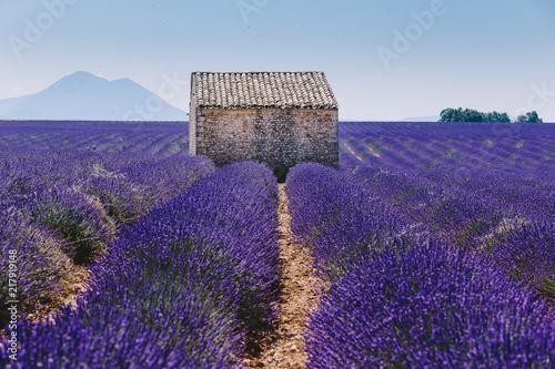 Tuinposter Lavendel maison typique provençale dans un champ de lavande