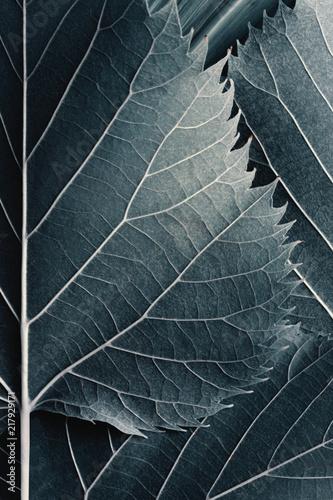 Deurstickers Macrofotografie Close-up of fresh blue leaves, natural background