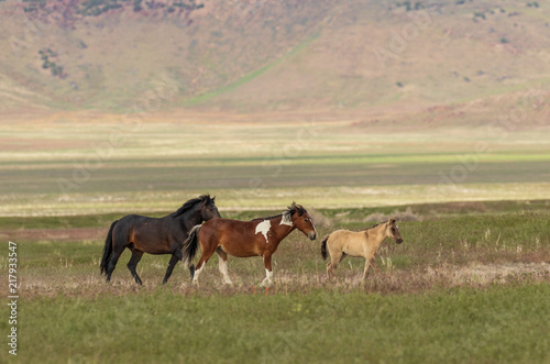 Majestic Wild Horses in Utah in Summer