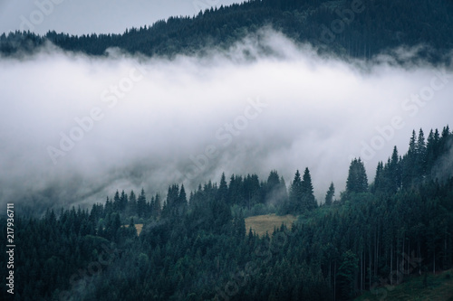 Poster Morning with fog Forested mountain slope in low lying cloud with the evergreen conifers shrouded in mist in a scenic landscape view, Carpathian Ukrane