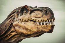 Close Up Shot From A Head Tyrannosaurus Rex