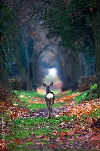 Staande foto Ree Reh,deer,Natur,Friedhof,Grabstein