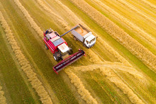 Combine Harvester Pours Grain Into Truck