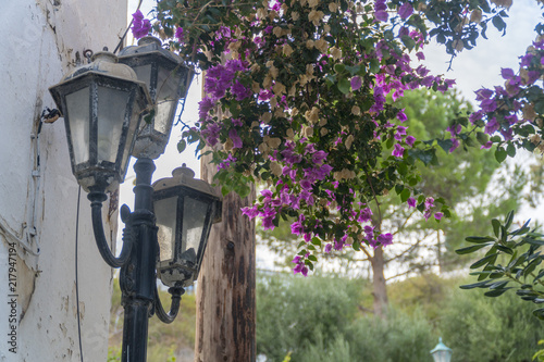 old street lamp with paperflower (bougainvillaea). Poster Mural XXL