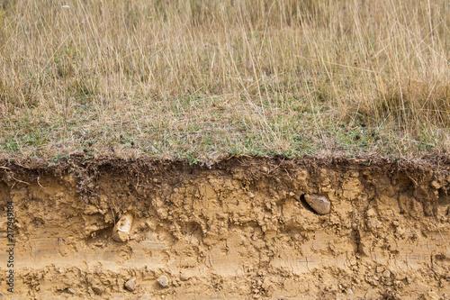 Fotografie, Obraz  Corte Transversal de Terreno Arcilloso con hierbas en la superficie