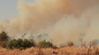 Wide-shot of ashes and smoke as a result of a large bush fire in a wilderness