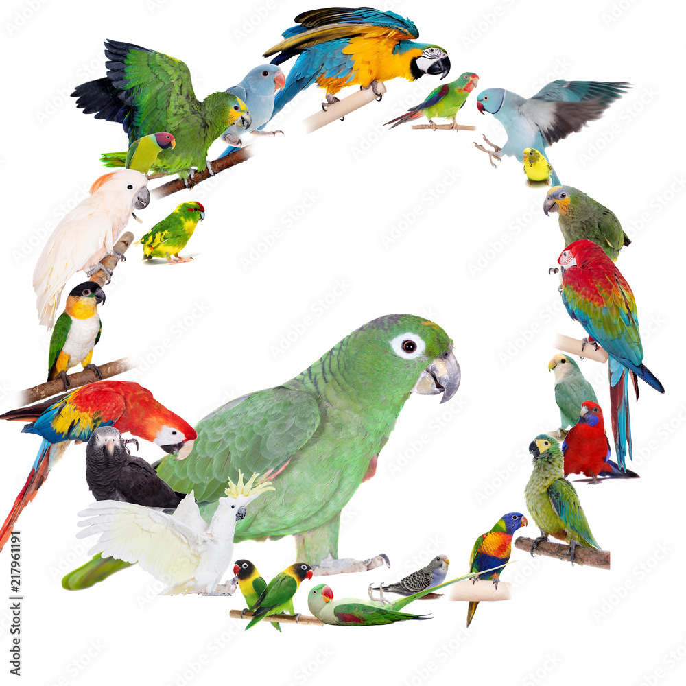 Parrots and parakeets circle set on white