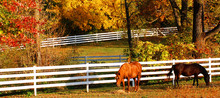 Horses In Pasture During Autumn
