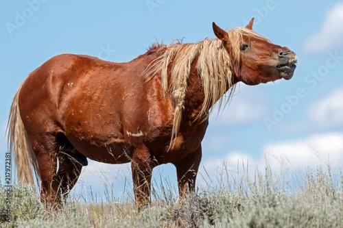 Foto  Wild Mustang