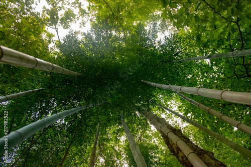 Poster Bamboe bamboo upwards