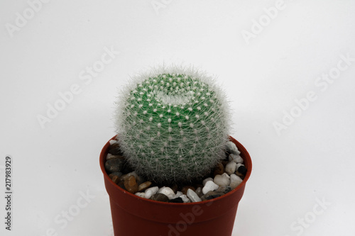 Staande foto Cactus Cactus. It a Desert plants It is small and beautiful.