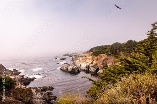Foto op Plexiglas Kust Waves break into a small cover. Fog is trying to move inland. A bird flies above. Pine trees are growing on the right side of the cove. A small house is hidden in the grove of trees.
