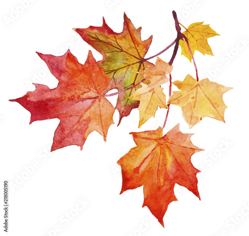 Fotografía  Watercolor illustration of yellow and red autumn leaves