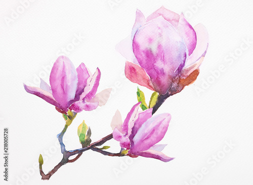 Photo  Watercolor illustration of hand painted seamless magnolia pattern