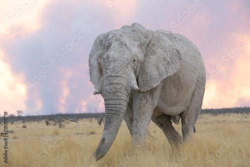Photo  Elefant flüchtet vor Buschfeuer