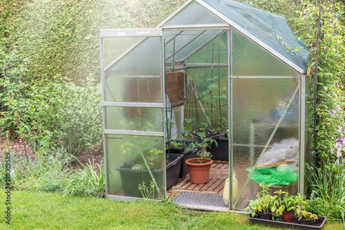 Little glasshouse in the garden
