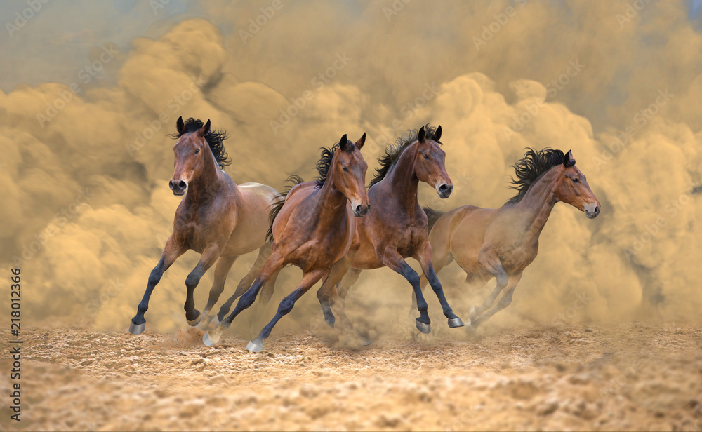 Four bay horses galloping fast from the dust storm