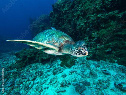 Foto op Aluminium Schildpad Green sea turtle