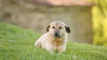 Stray Dog Sitting On Meadow Th...