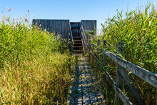 Wooden Lookout Tower For Landscape And Bird Watching In Reed Bed. Hiking Trailleading Up To Tower. Location Lake Takern In Sweden.