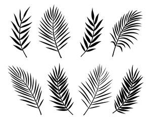 crno izolirano lišće i grane palme na bijelom