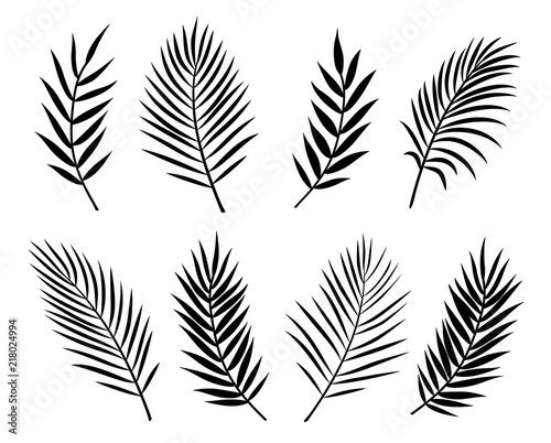 Obraz black isolated palm leaves and branches on white - fototapety do salonu