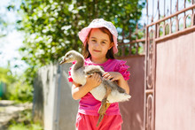 Little Girl And Canada Goose In Park