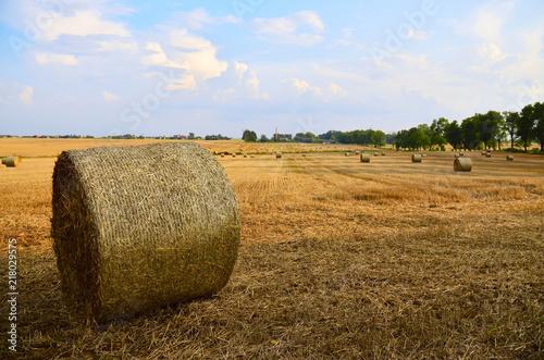 Obraz Belka słomy na polu, wiejski krajobraz - fototapety do salonu