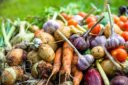 Freshly Harvested Vegetable Background Healthy Farm Fresh
