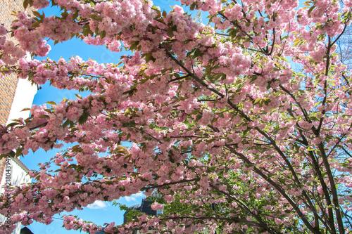 Foto op Plexiglas Magnolia Mood of spring