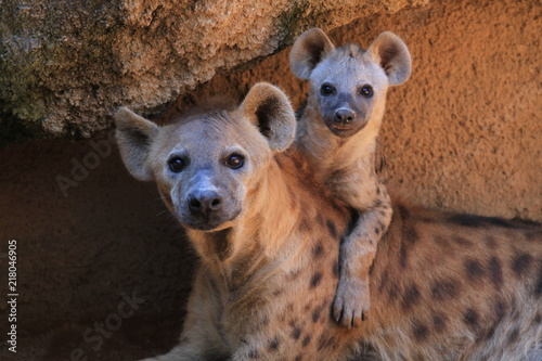 Deurstickers Hyena Madre e hijo