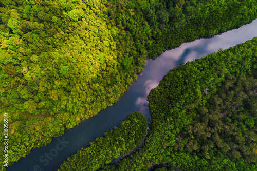 Riviere River in tropical mangrove green tree forest