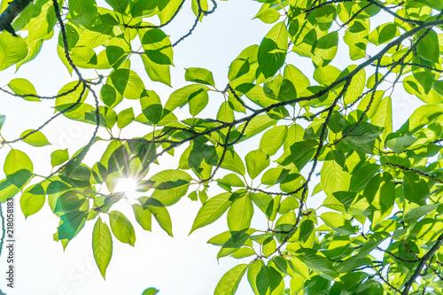 Fotografía  新緑の葉