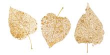 Set Of Golden Leaves Skeletons...