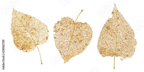 Obraz Set of golden leaves skeletons. Fallen foliage for autumn designs. Natural leaf of aspen and birch. Vector illustration - fototapety do salonu
