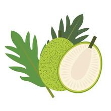 Healthy Organic Breadfruit