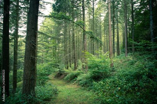 Fototapeten Natur Bosweg met een mystieke sfeer