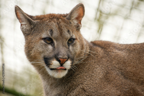 Poster Puma Beauval