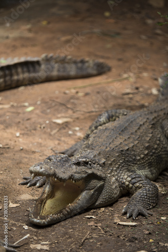 Staande foto Krokodil Crocodiles Resting at Crocodile Farm in Thailand