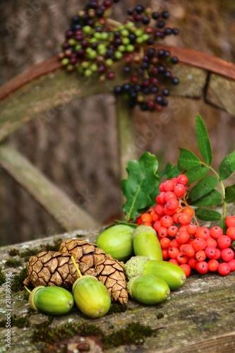Fotografía  waldfrüchte auf einem alten leiterwagen sammeln