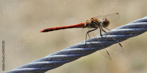 libellule sur un câble acier