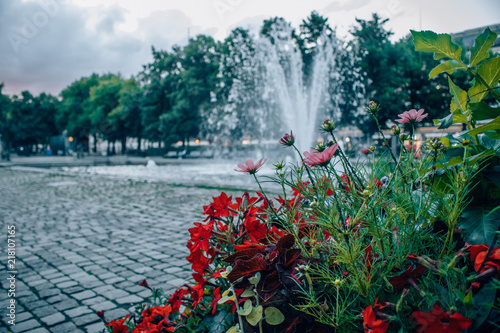 Photo  Flowers in Oslo while summer