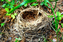 Fallen Nest For Birds And Thei...