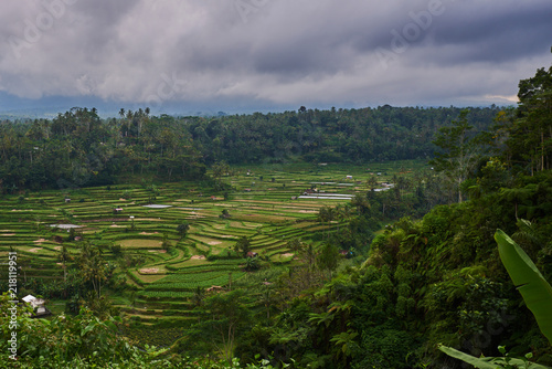 Landscape, terraced rice field surrounded by tropical forest. Plantation, farm. An organic asian farm and agriculture. Lush green fields of the countryside. Nature and landscape.