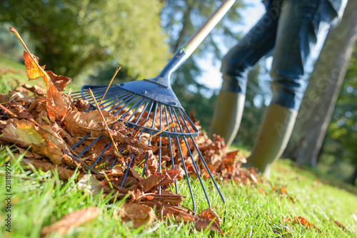Fotografie, Obraz close up of rake and fallen leaves with grass